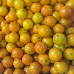Diferentes tipos de naranjas1