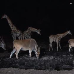 animales-nocturnos-sabado-verde-sergio-elguezabal